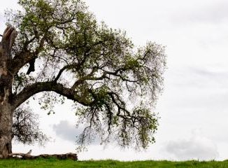 Veszélyesnek tűnő fa van a kertbe? Szeretnénk, ha megszűnne a probléma? Akkor mindenképpen szakemberre van szükségünk annak kivágásához. Sokan maguk próbálják meg kivágni a veszélyes fákat és ezzel a biztos baleset felé sodorva magukat.